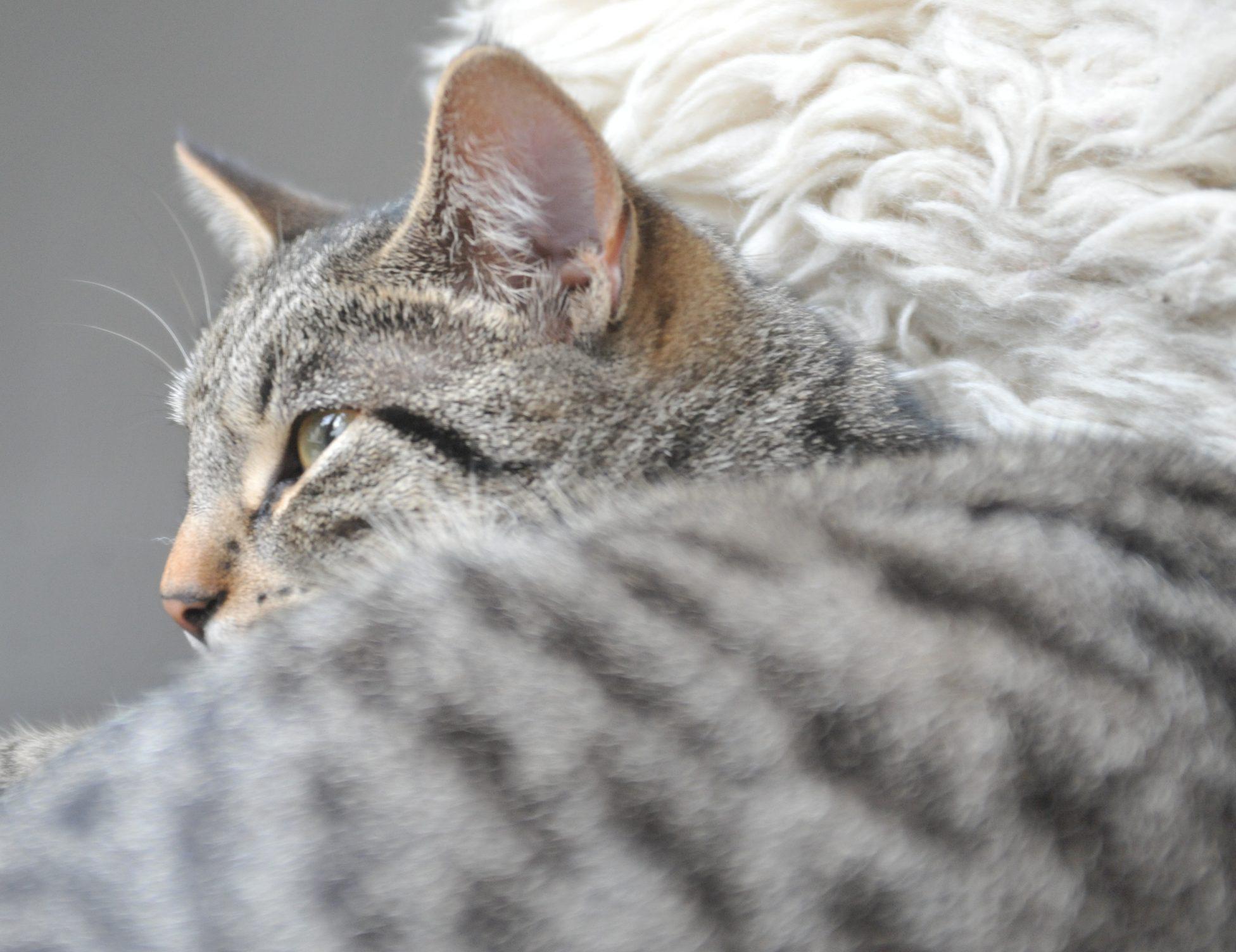 De kattendokter aan huis